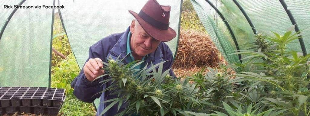 rick simpson looking at cannabis plants to make oil with